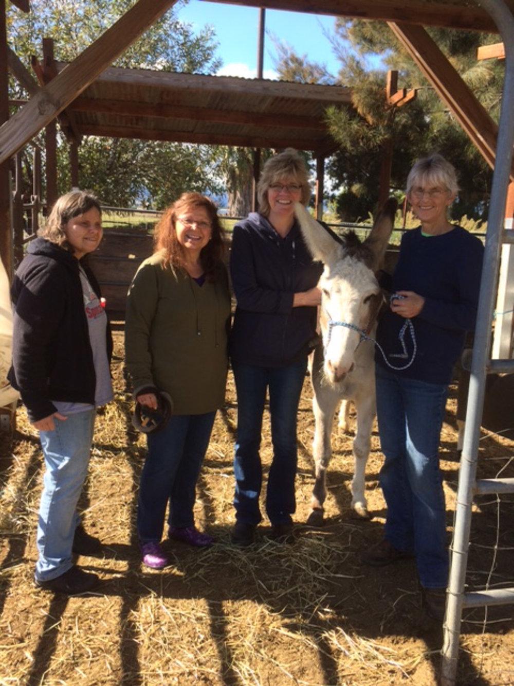 Donkey with friends.