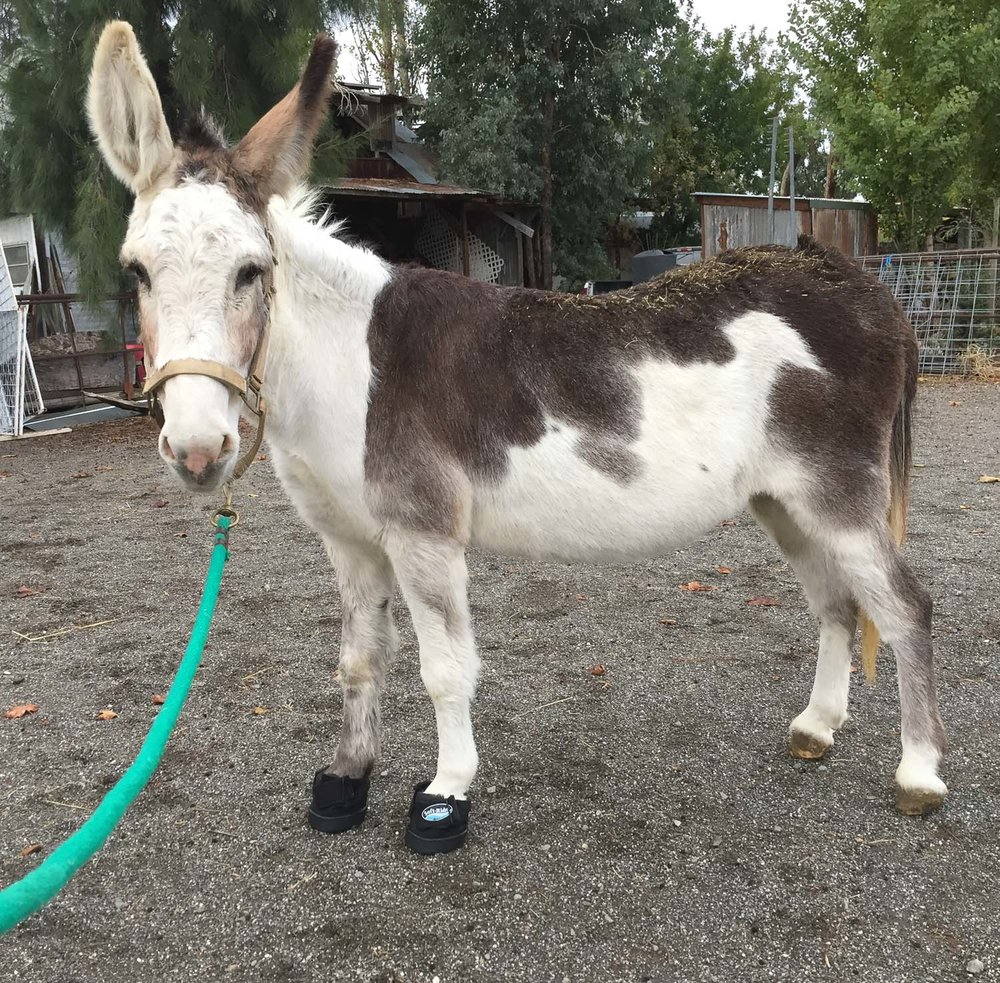 Donkey with soft-ride boots