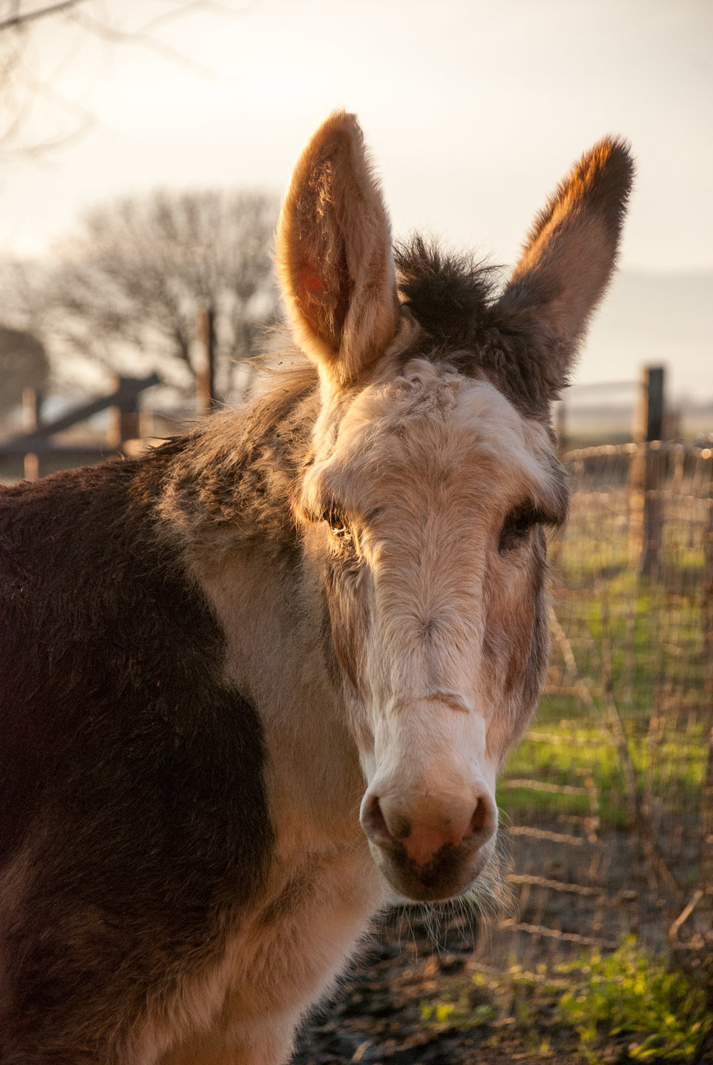 Donkey view.