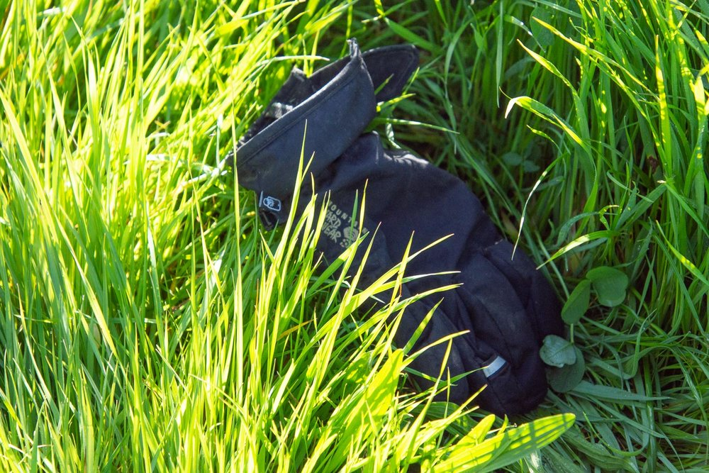 Glove in the pasture.