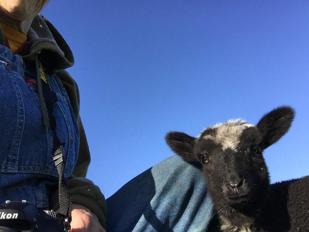 Bottle lamb selfie