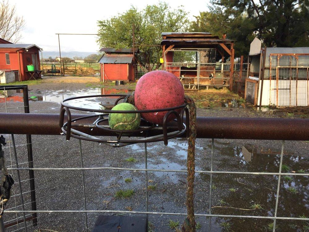 Custom ball holder along fence.