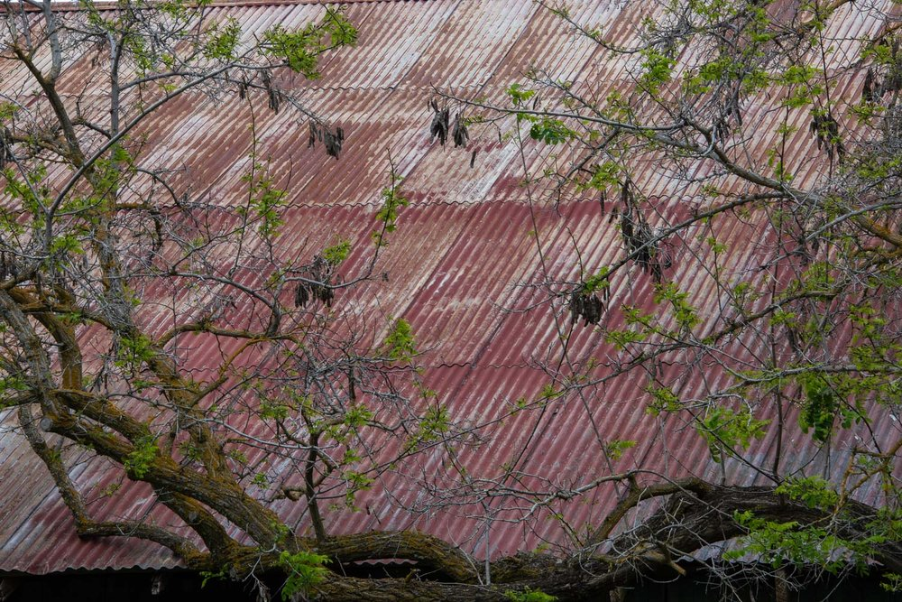 Lichen covered roof