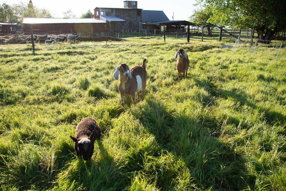 As I follow the sheep to the pasture this is my entourage.