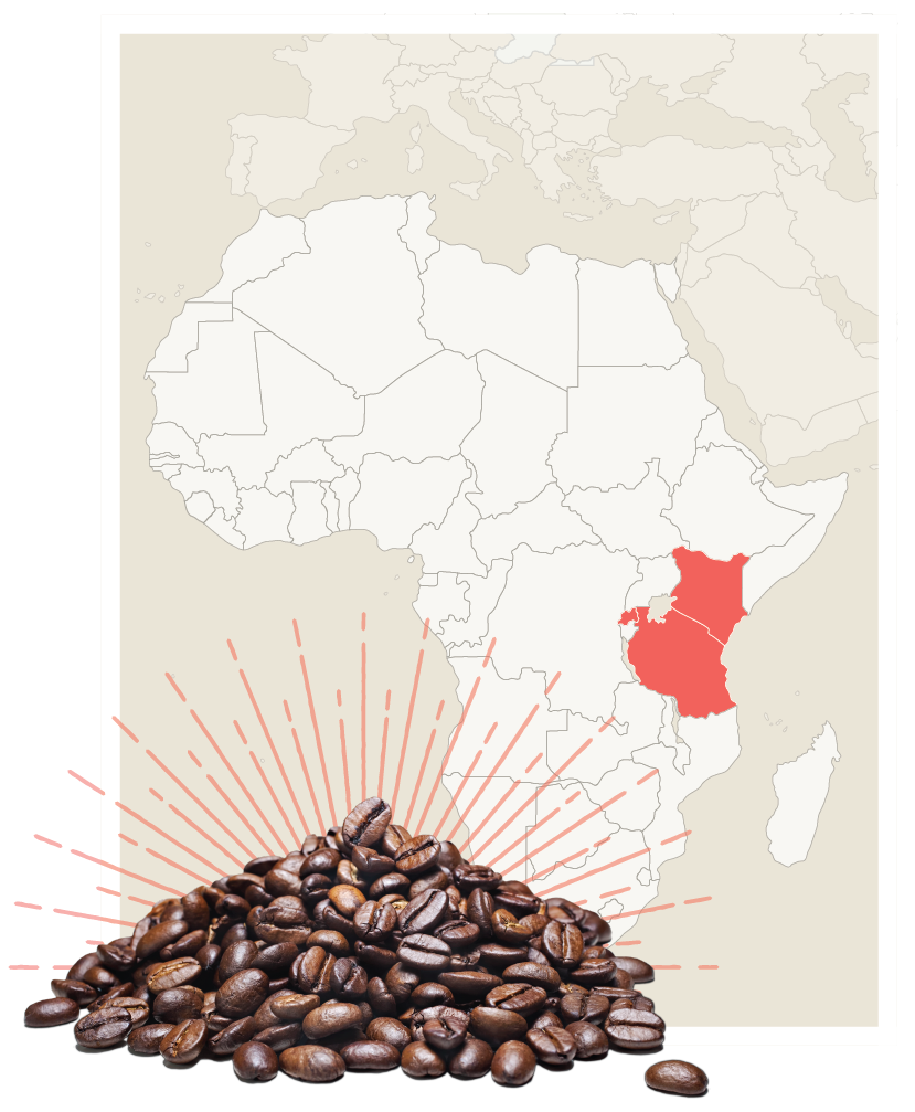 africa beans-07.png