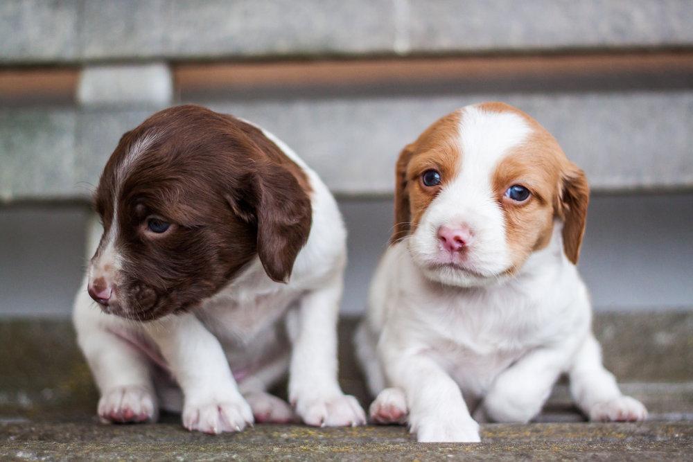 Private Puppy Pre-School in Denver, Family Pupz