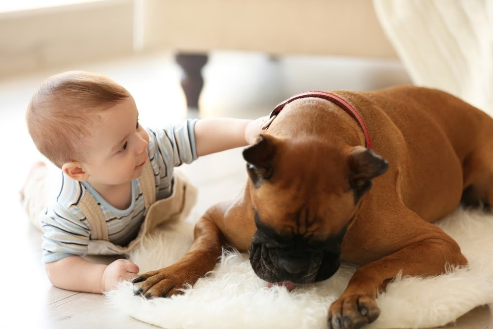 """Become aware of """"grumble"""" & """"growl"""" zones in your home."""