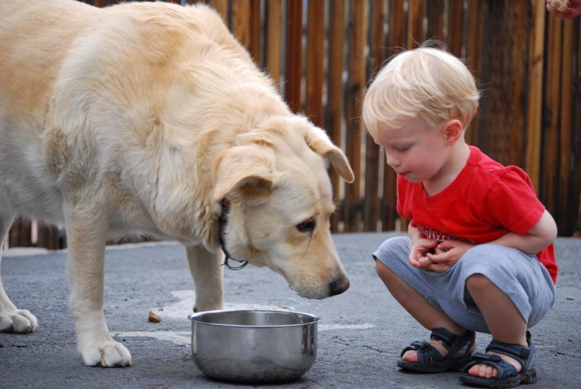 Discuss dog & toddler safety.