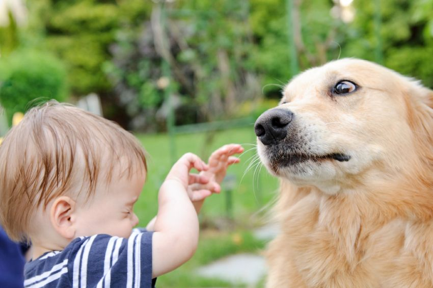 Learn about dog body language.
