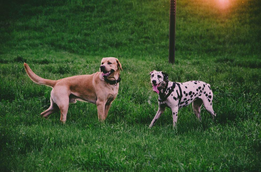 Canine Body Language: Look Away Family Pupz Denver