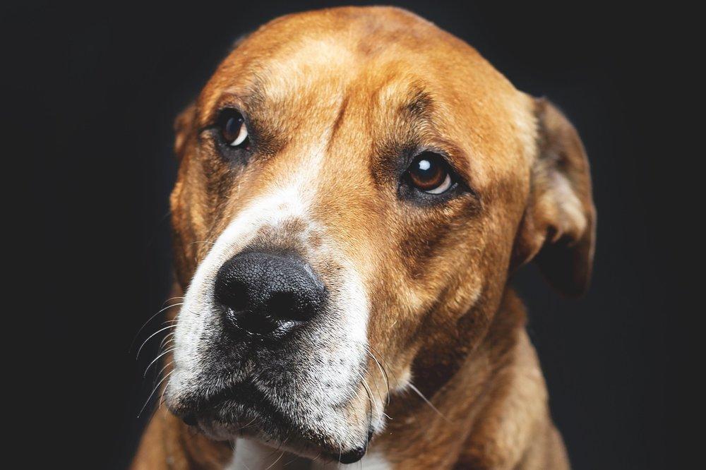 Canine Body Language Look Away Family Pupz Denver