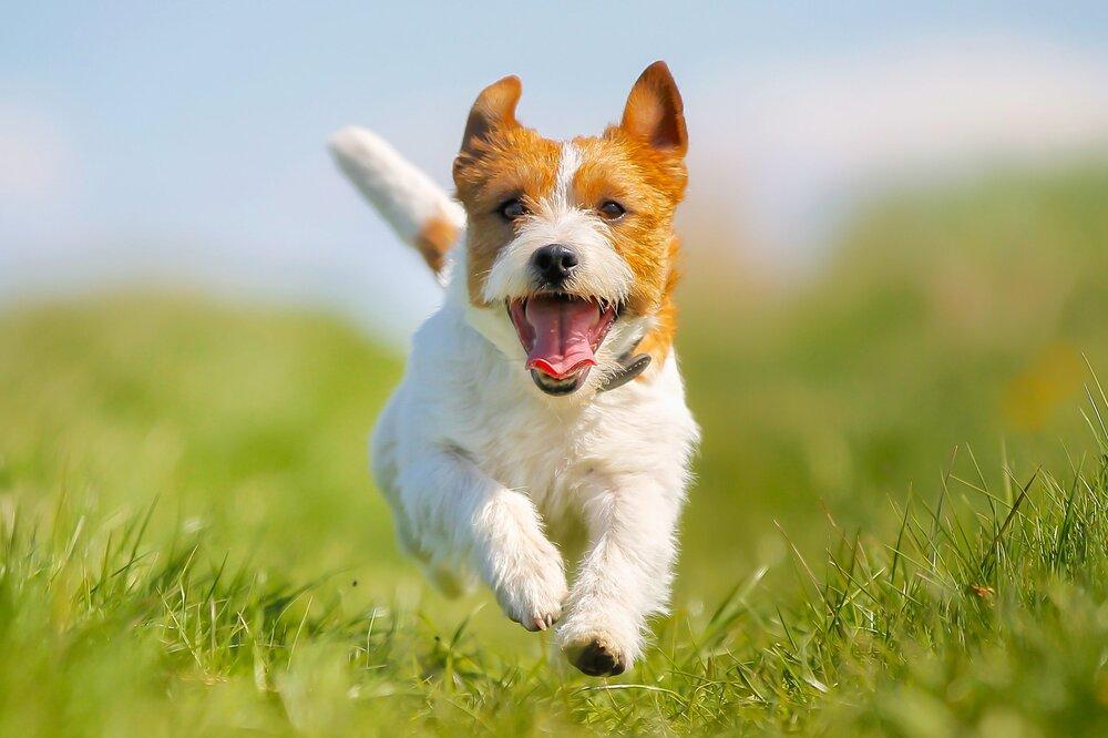 Recall Skills Dog Training Denver Family Pupz