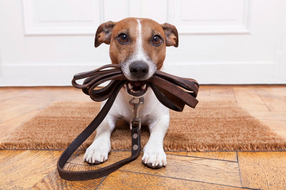 Impulse Control Dog Training Denver Family Pupz