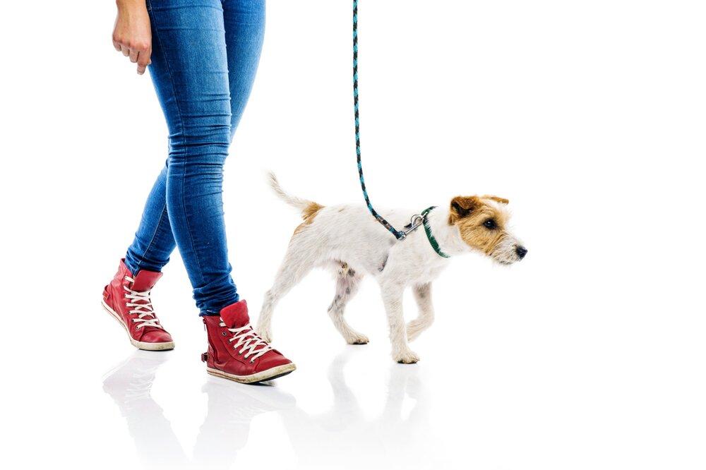 loose leash walking dog training denver  family pupz