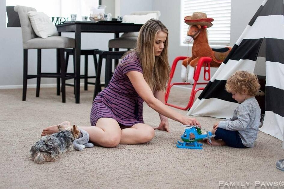 dog training and support for families with dogs and toddlers denver  family pupz
