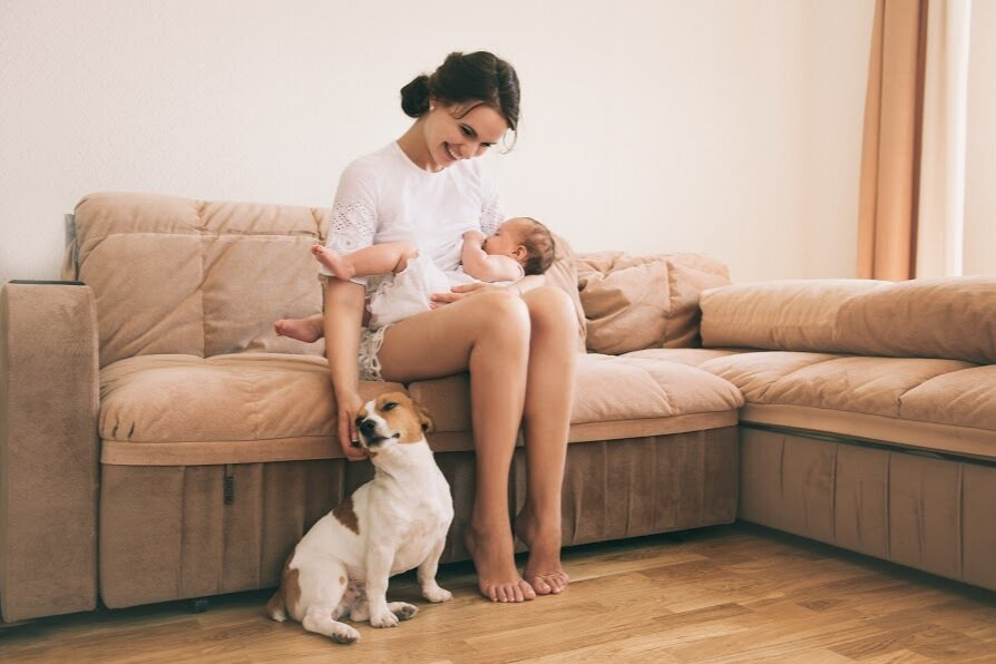 dog training and support for expecting families denver  family pupz