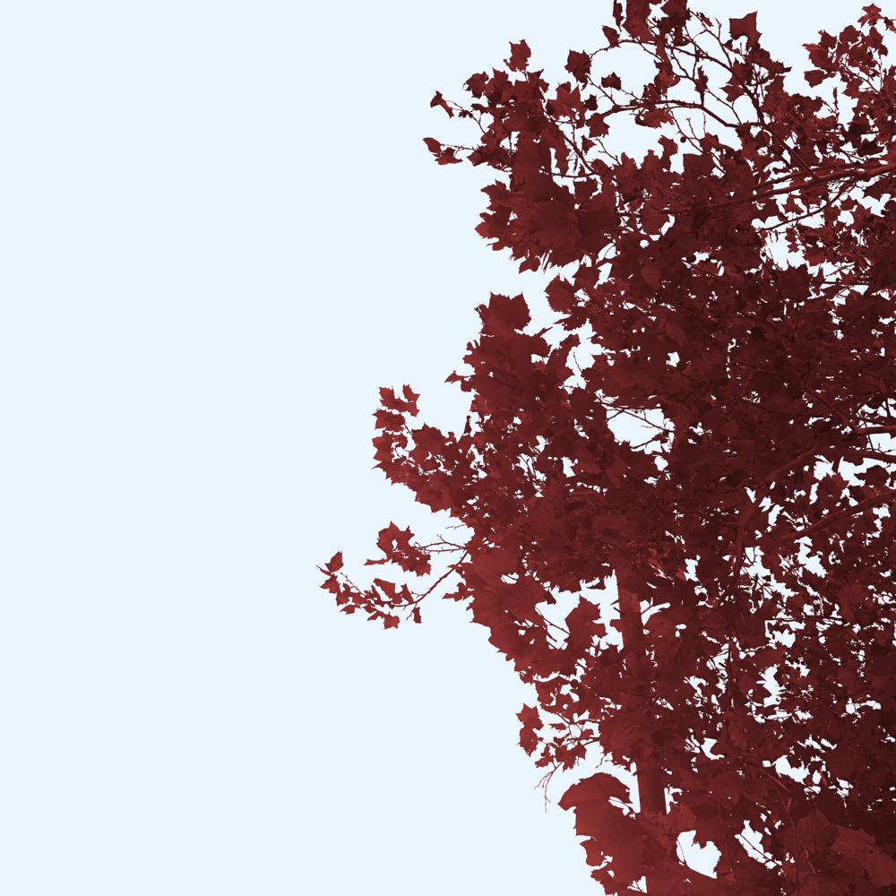 Tree-notaslightbasicred.png
