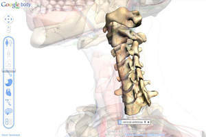 orem chiropractor neck adjustments spine