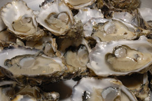 raw oysters for vitamin b12