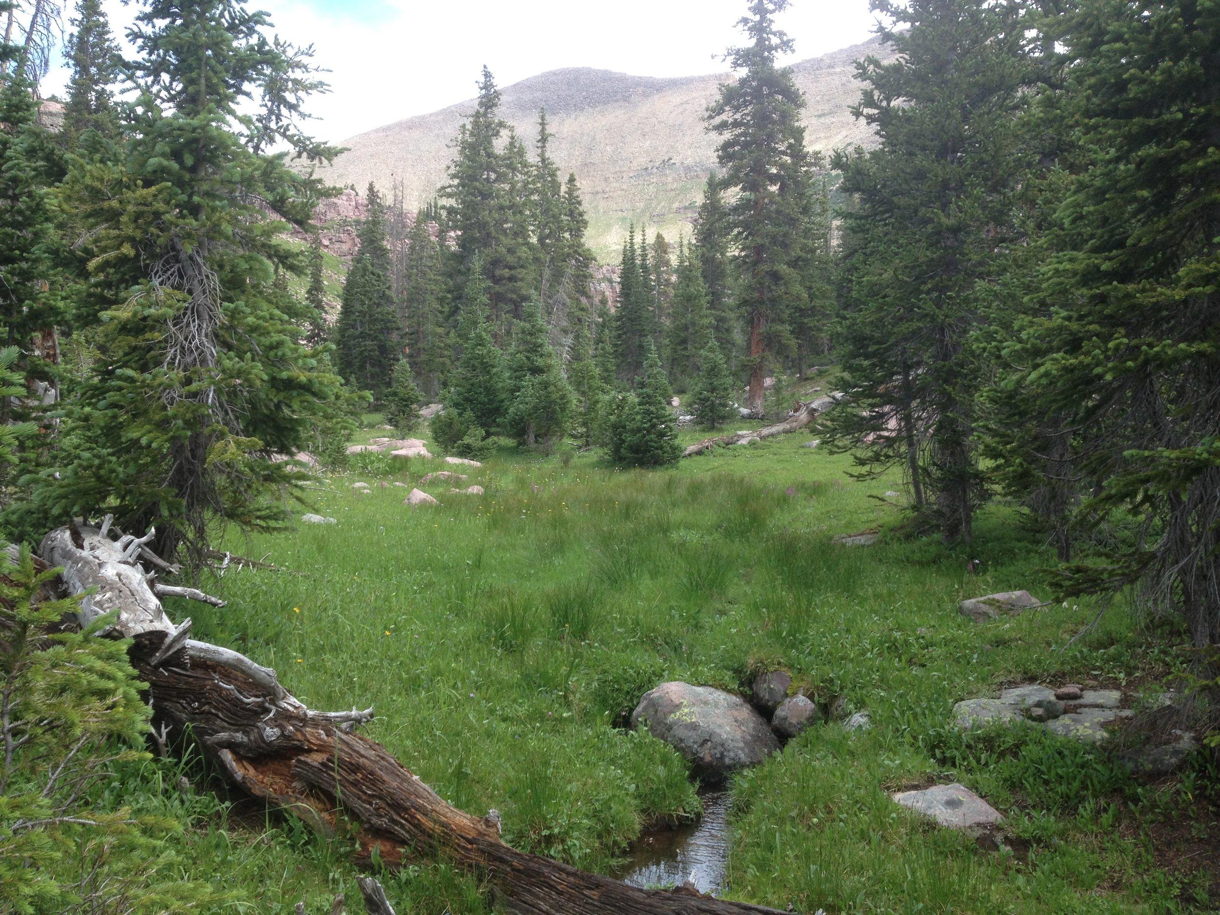 fibromyalgia utah doctors uintas rock creek drainage3
