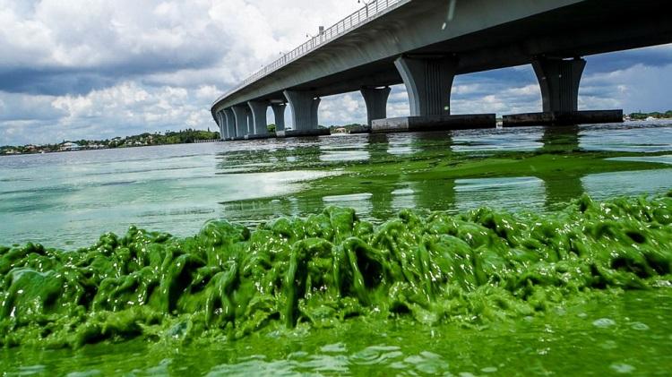 Algae-bloom.jpg