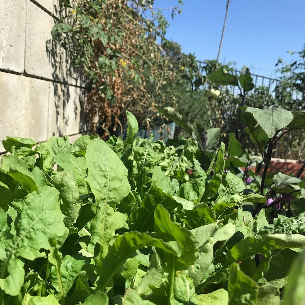 Edwin's farm1.jpg