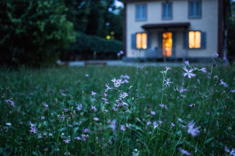 Lawn Installation - Grass Traditional Backyard