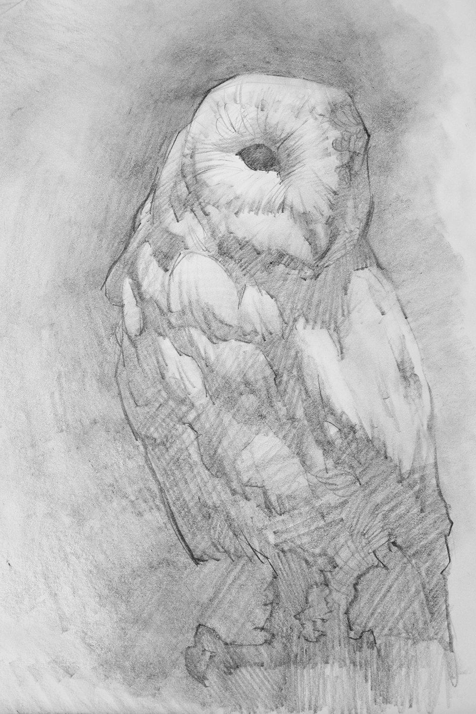 Graphite_AnimalStudies_Owl_01_POSTED.jpg