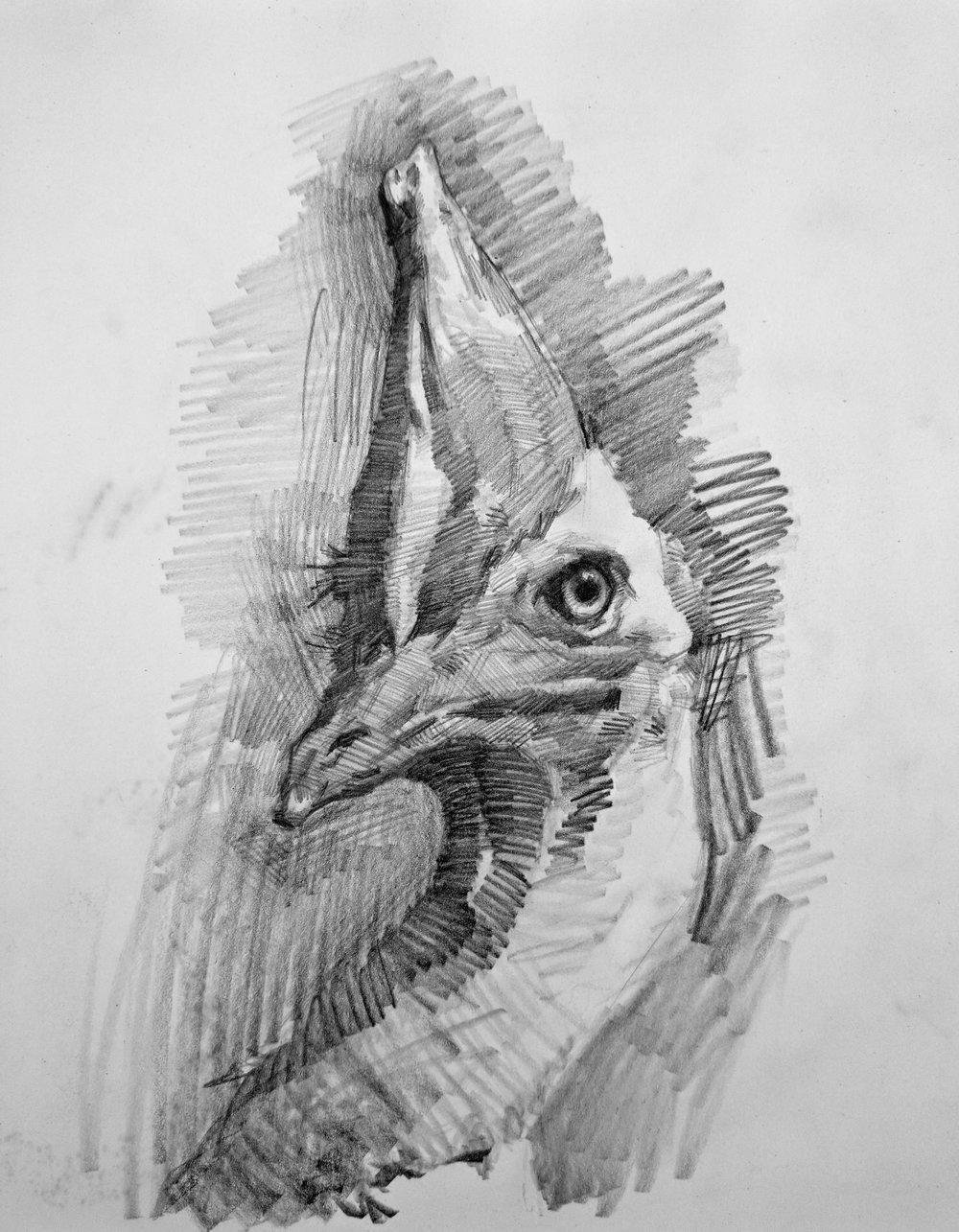 Charcoal_AnimalStudies_Bird_01.jpg