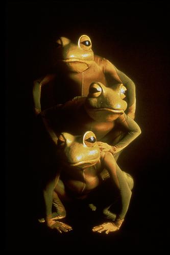 Frogz!: 2015