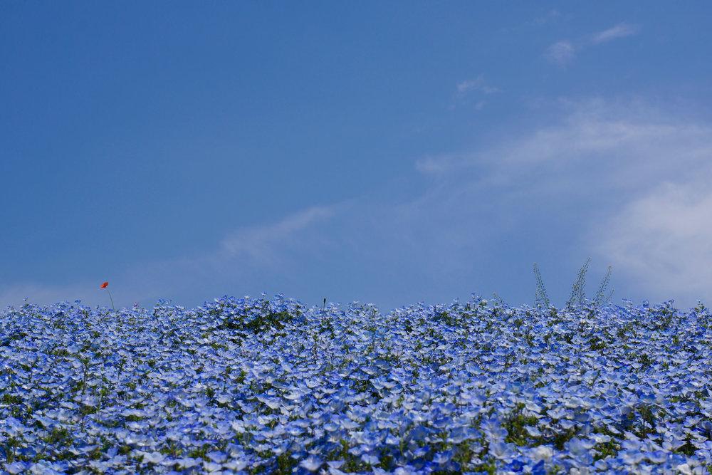 Flickr/Kentaro Ohno