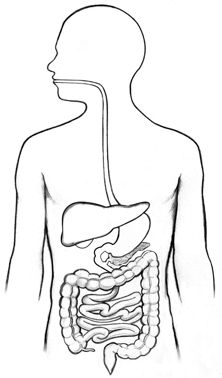 enzyme-image.jpg