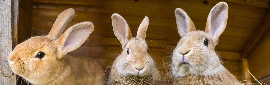 rabbits-900.jpg