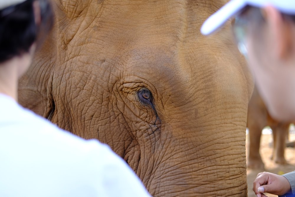 100,000 - average amount paid in $US to rescue a baby elephant