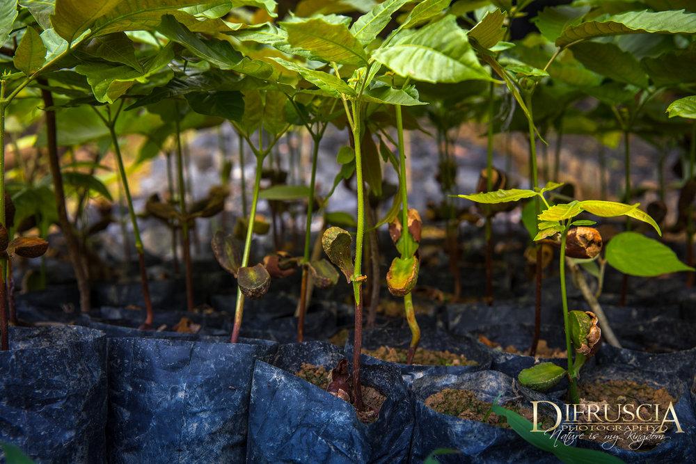 seedlingsDF.jpg