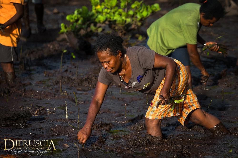 Woman_Worker_Planting_MangrovesDF.jpg