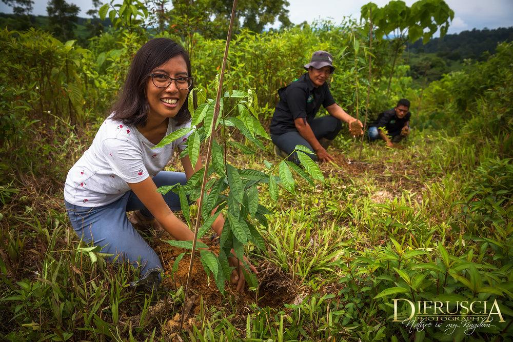 Workers_planting_treesDF.jpg