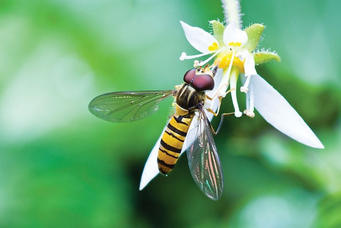 Decoding insects' chemical cues