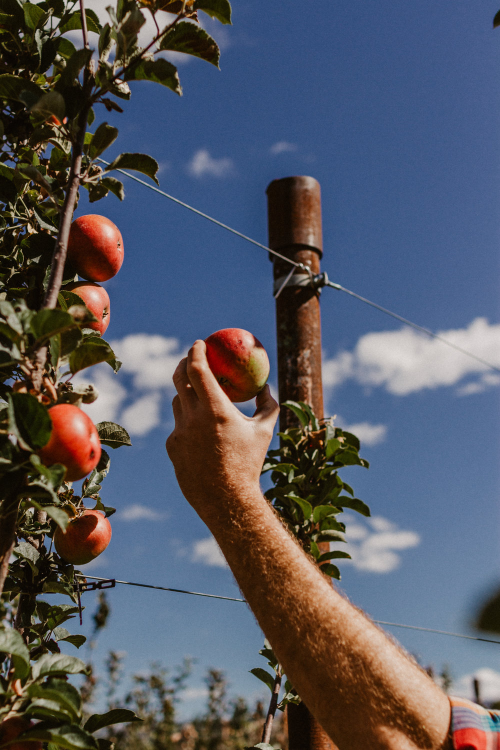 OCT. 20    Orchard Tour   A rare chance to see where it all began and have a drink.   See Details