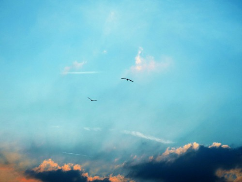 Sinking Into Blue -