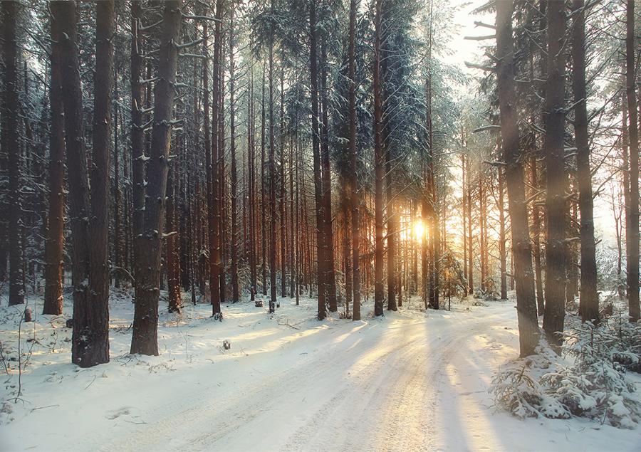 winter-scenery.jpg