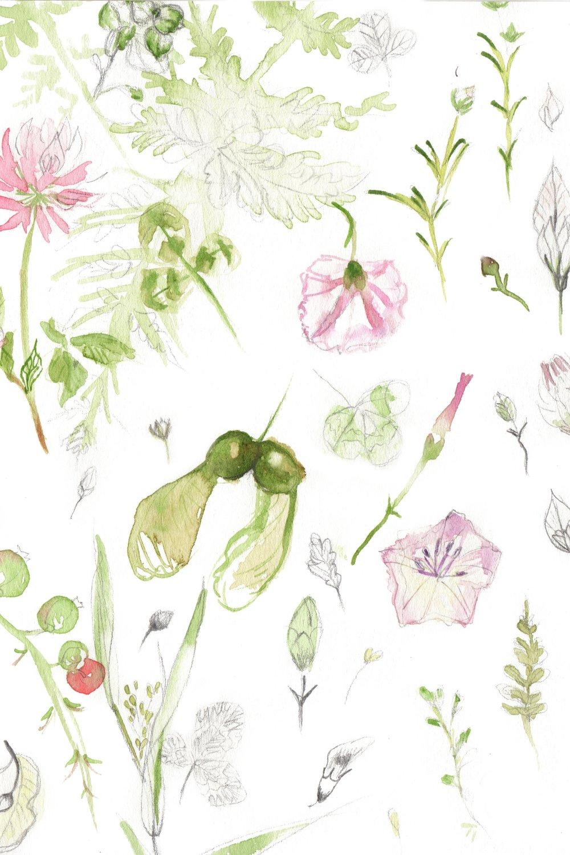 petalsandleaves.jpg