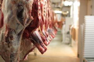 Slaughterhouse_cattle_bodies-300x200.jpg