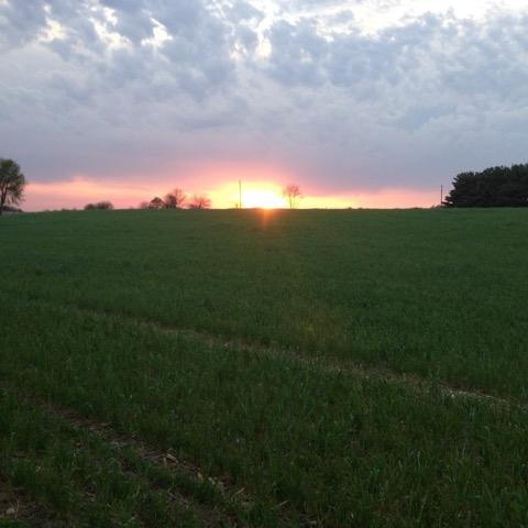 fieldsunset.jpeg