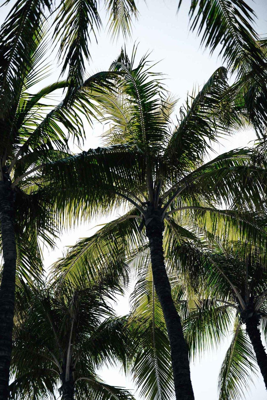 Oahu-Hawaii-13.jpg