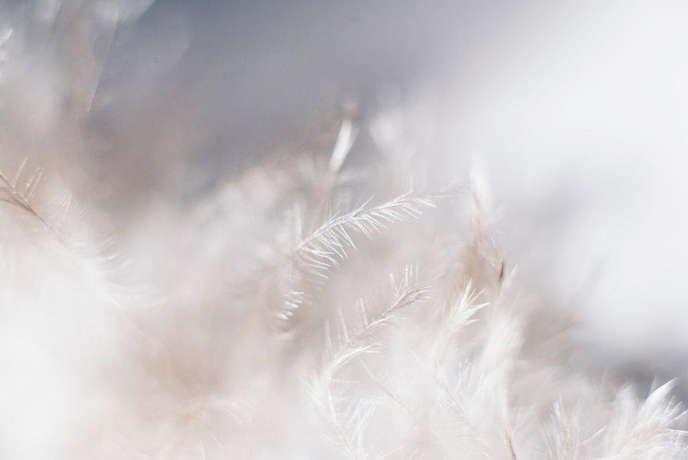 coalesce-fairuse-photo7.jpg