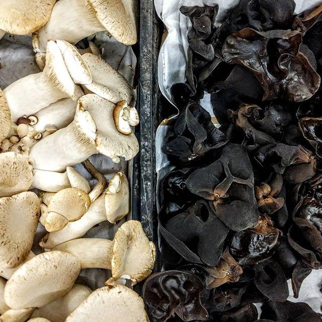 Ready for ramen. #amahanalei #mushroomsinmysuop #getyourslurpon