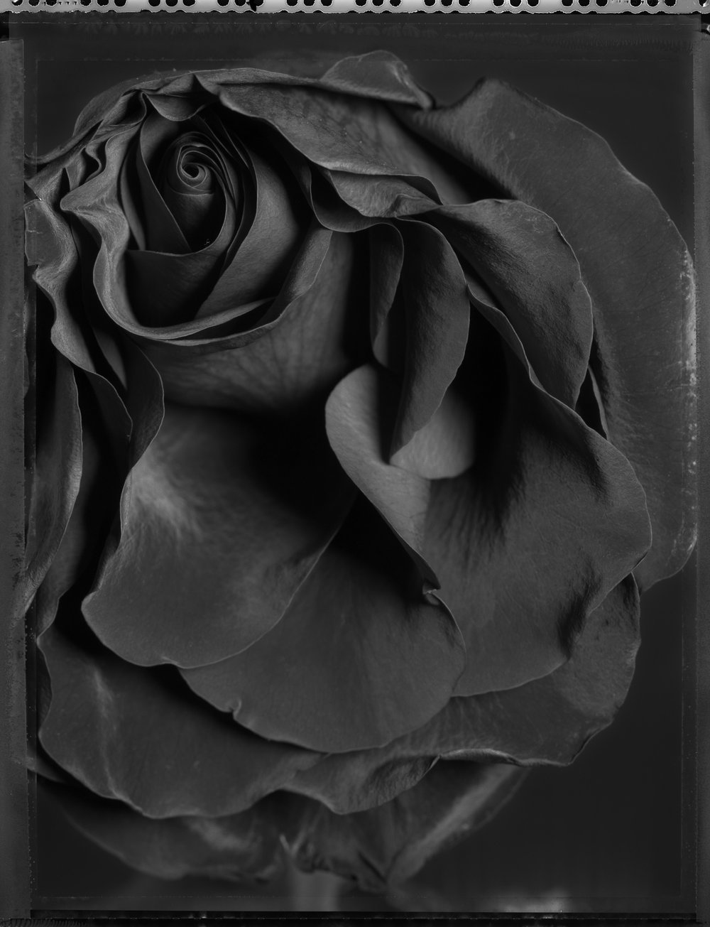 cabbage-rose-layers131.jpg