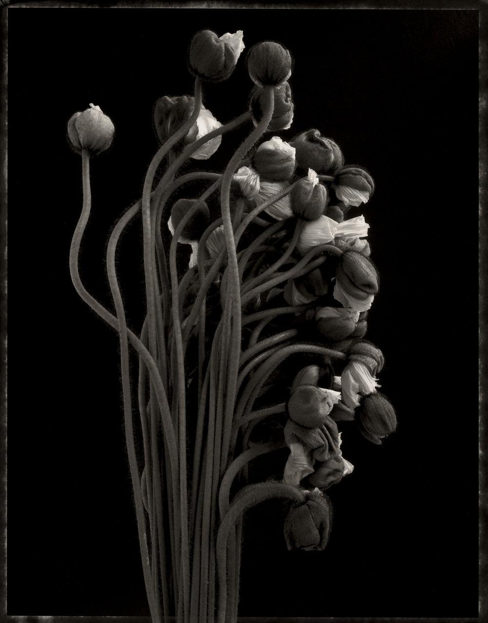 darkpoppies_print23.jpg