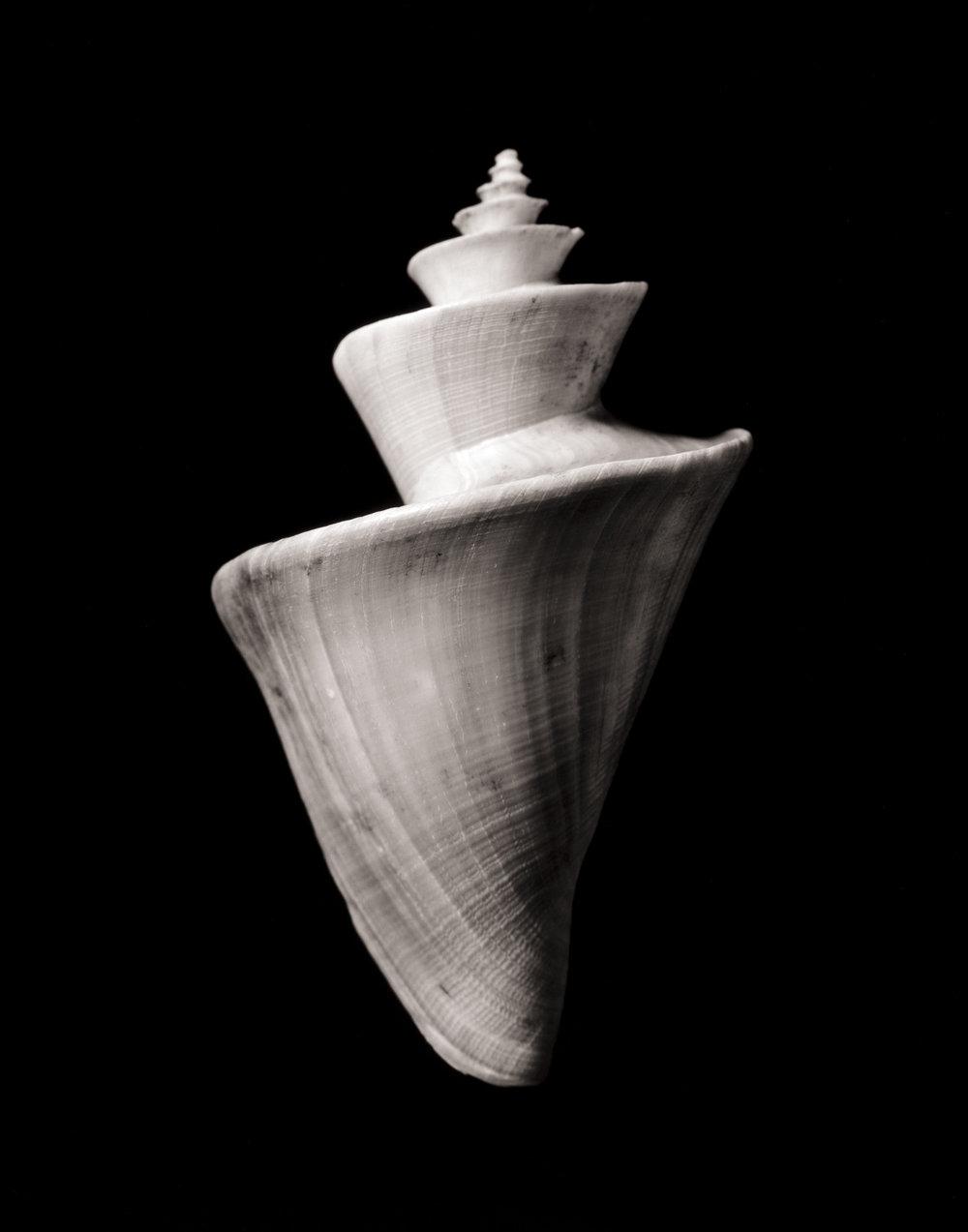 shell2_print12.jpg